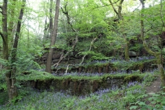 Bluebells near Bromley Cross